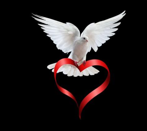 White-Dove-Love-960x1080