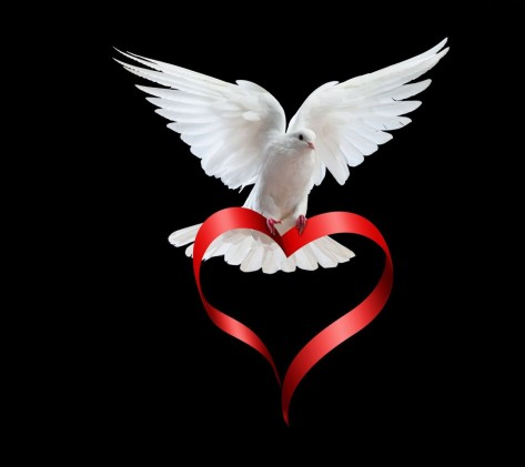 White-Dove-Love-960x1080